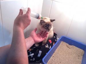 Alimentación por sonda de una gatita